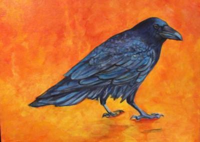 orange beach crow